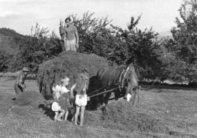 Ernteeinsatz auf Kraschonig-Wiese1942