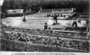 Gärtnerei Grohar Anton 1911