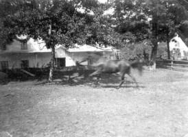 Koch Pferdewiese 1920er Jahre