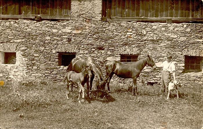 Hans Koch mit Pferden 1920